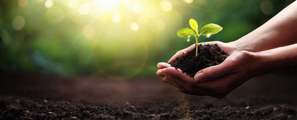 Sustainability is increasingly becoming a central aspect of our world, particularly within the materials industry. An image of a tree being planted.